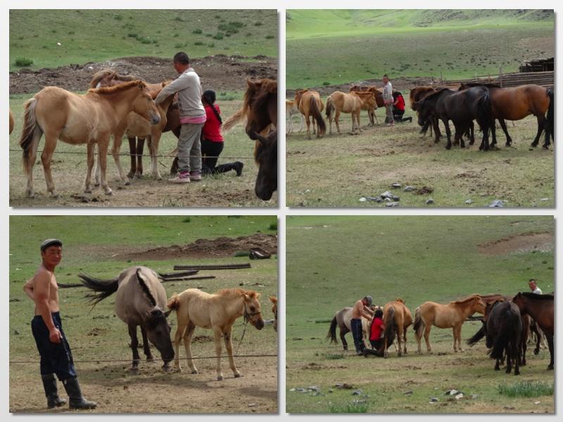milking mares