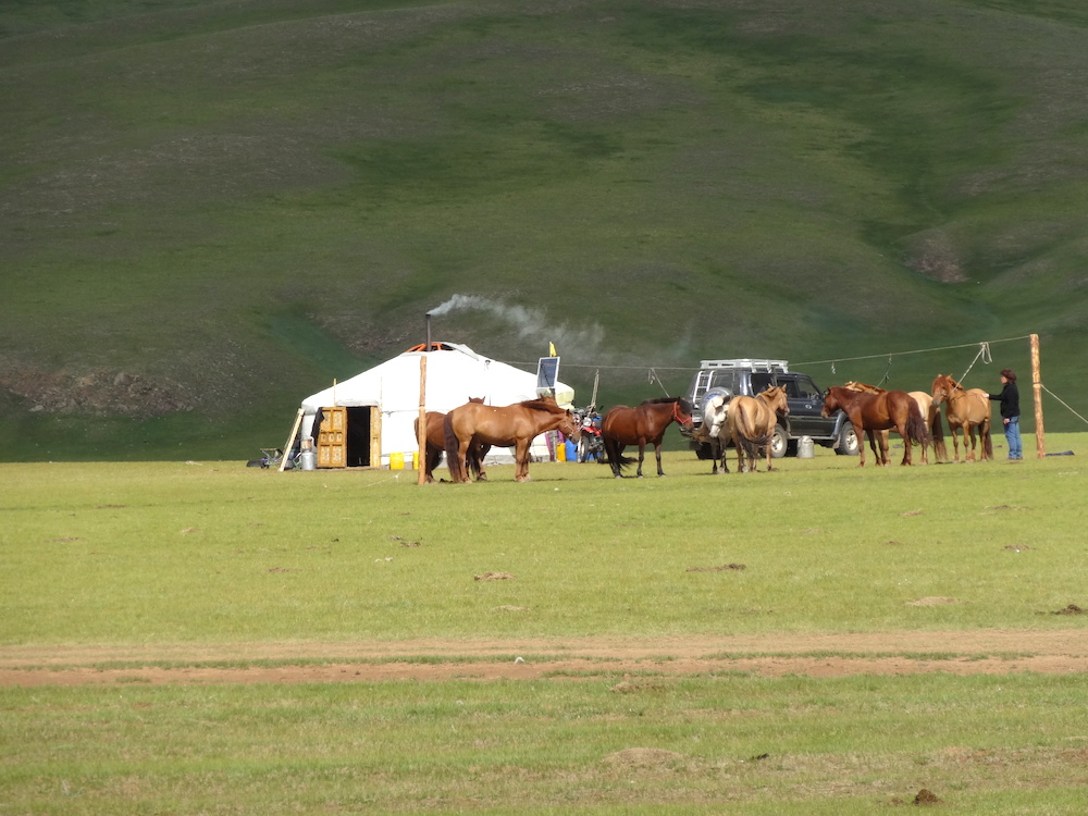 milking the mares mongolia