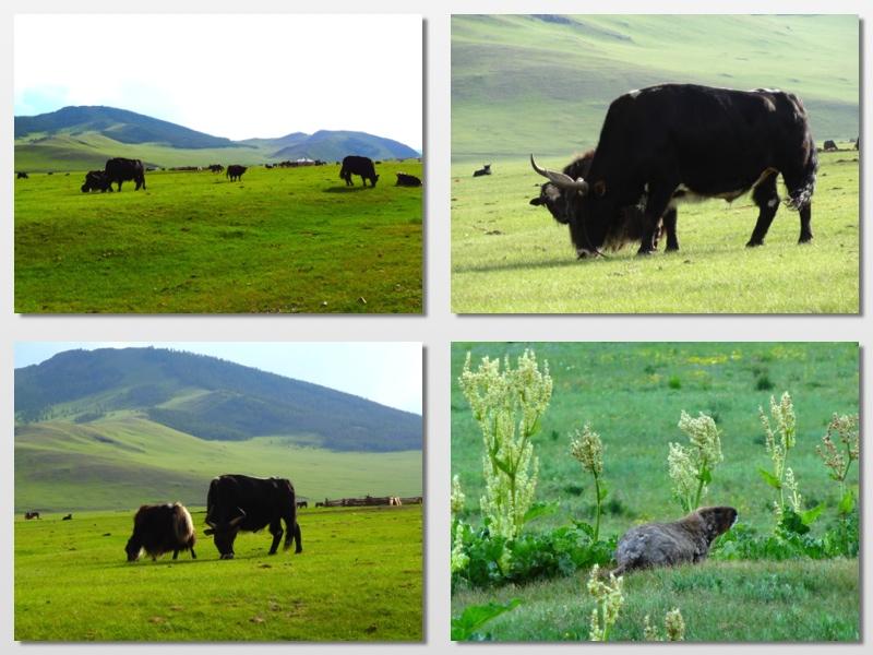 mongolian landscape 3